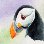 Puffin / Papageientaucher