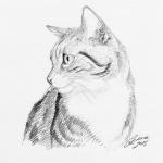 Cat Portrait with pencils