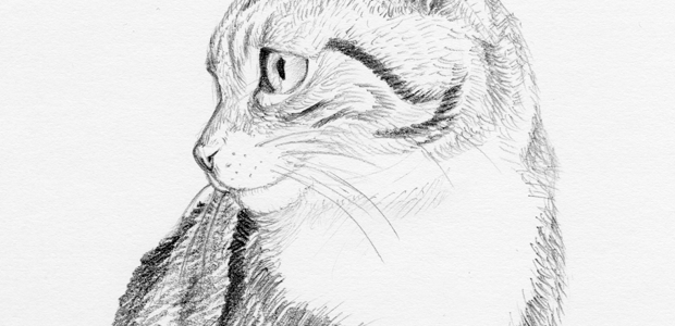 Cat Portrait – Mokka