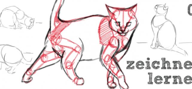 Katzen zeichnen – Basics