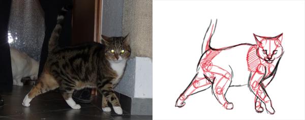 Katzen zeichnen - vereinfachte Anatomie von Katzen