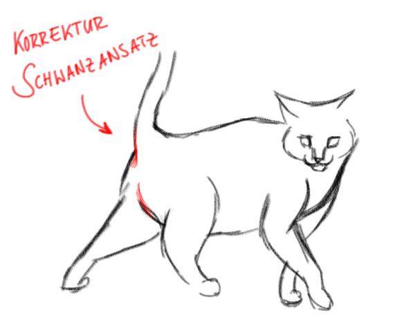 Katzen Zeichnen Grundlagen