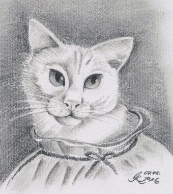 Katzenportrait Gismo