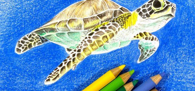 Meeresschildkröte mit Polychromos Stiften zeichnen