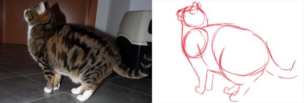 Katzen zeichnen - Grundformen Katze stehend