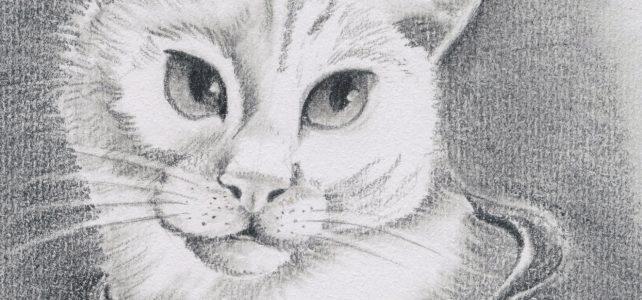 Katzenportrait von Gismo